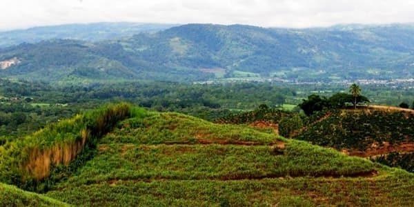 Plantation de café au Costa-Rica